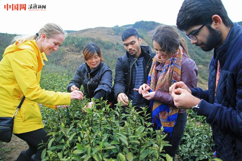 寧波:外國學子體驗中國茶文化