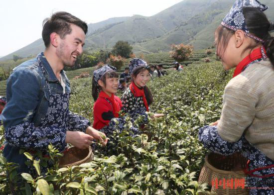 湖州安吉:中外學生 茶園沁香行