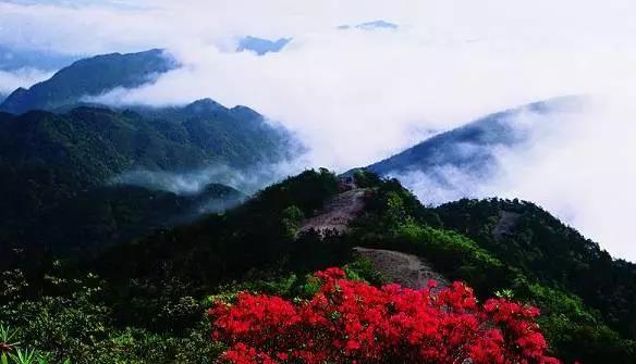 乌岩岭国家级自然保护区.jpg