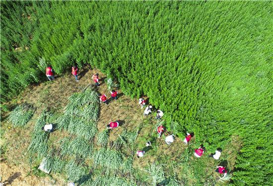 首届艾草文化节顺利举行 杭州下姜共建共享健康产业