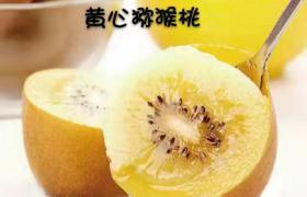 蒲江黃心獼猴桃 5斤裝