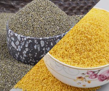 山東特産 3袋黃小米+2袋黑小米